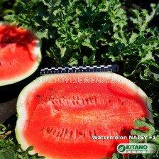 Дини Naisy F1 - 100 семена