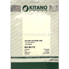Семена корнишони KS 84 F1 - gherkins KS 84 F1