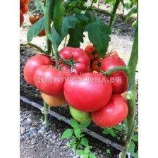 Сорт домати Димероса F1 - 500 сем