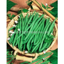 Семена Грах Flavora SG