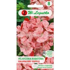 Семена Мушкато Дива F1 /Pelargonium x hortorum Divas F1 /LG 1 оп