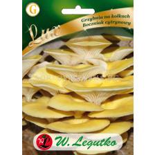 Гъби Златна стрида / Pleurotus citrinopileatus /LG 1 оп