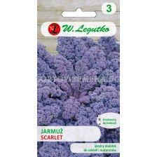 Кейл Скарлет-лилаво / Curly Kale Scarlet / 1 оп