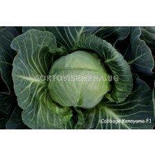 Семена зеле Канаяма F1 - cabbage Kanayama F1 - 100 сем