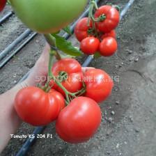 Семена домати Акеми (KS 204) F1