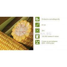 Семена царевица Синдон (Sindon F1) Syngenta  - 1 оп -100 000 семена
