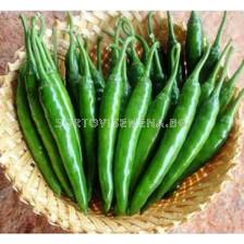 Пипер люти чушки TSX-187 F1 - Pepper Chilies TSX-187 F1 - 100 сем