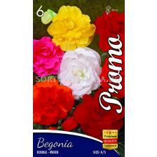 Бегония (Begonia) Double mixed 4/5