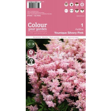 Астилбе younique silvery pink (1оп - 1 коренище)