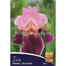 Ирис (Iris) Germanica rosa/pupur