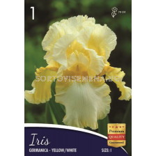 Ирис (Iris) Germanica yellow/white