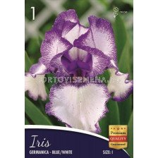 Ирис (Iris) Germanica blue/white