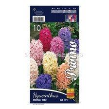 Зюмбюл (Hyacinth) Mix 14/15