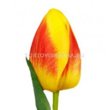 Лале (Tulip) Courage Brigitta 11/12