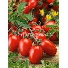Сорт домати Керо F1 - 1000 сем