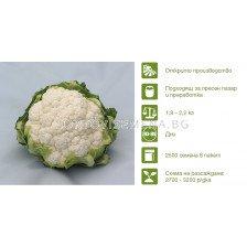 Семена карфиол Спейсстар (Spacestar) Syngenta 1 оп-2500 сем
