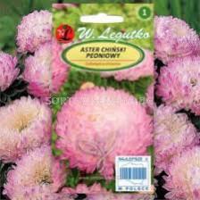 Астра божур бяло-розова /Callistephus chinensis Paeony pink&white/ LG - 1 оп