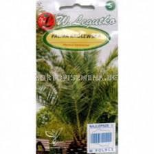 Канарска финикова палма /Phoenix canariensis green/ LG 1 оп
