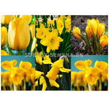 Луковици микс в жълто - Yellow Garden in Gift Bag (50 луковици)