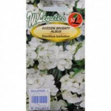 Карамфил кичест /Dianthus barbatus Albus/ LG 1 оп