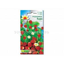Ягоди /Rugia/ TF-0.3 гр
