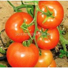 Сорт домати  АБС 7021 F1. Аграра ООД. Сортови семена Дар.