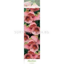 абутилон Розов - abutilon Pink
