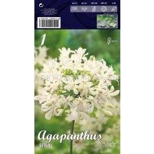 Агапантус Бял -  Agapanthus White