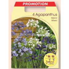 Агапантус микс / Agapanthus mixed / 1 оп ( 4 бр )