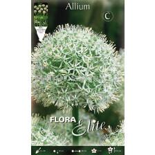 Декоративен Лук (Allium) Mount Everest
