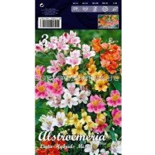Алстромерия (Alstroemeria) mix