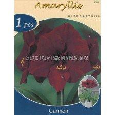 Амарилис (Amaryllis Hippeastrum) Carmen