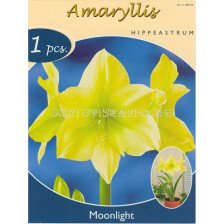 Амарилис (Amaryllis Hippeastrum) Moonlight