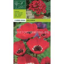 Анемоне Hollandia  - Anemone Hollandia - (пакет - 25 луковици)