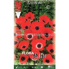 Анемоне (Anemone) Hollandia ( 20 луковици)