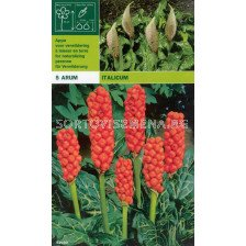 Арум (Arum Italicum)