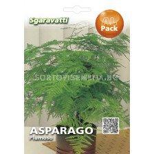 Семена Аспарагус (мъката на художника)`SG