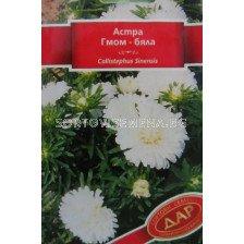 Астра - Гном бяла