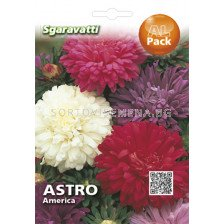 Астра (Aster) America mix`SG