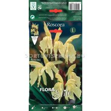 Miscellaneous - Roscoea beesiana - 1бр