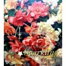 Бегонии (Begonias) Mix Sparkling