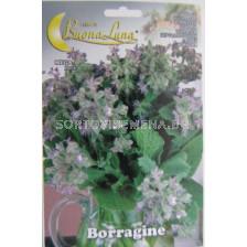 Борагине - краставична трева, пореч