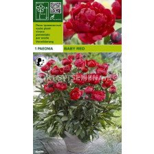 Божур Baby Red (40 см)
