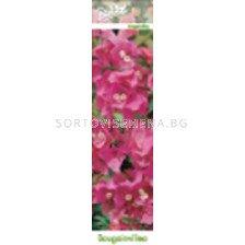 Бугенвилия (Bougainvillea) - розова