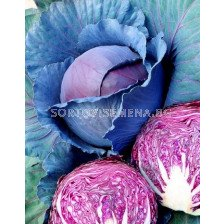 Зеле (Cabbage) Scarlet pearl F1 - 500 сем