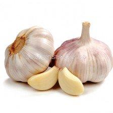 Чесън бял (Garlic White)
