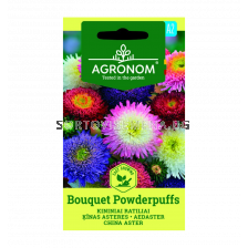 АСТРА CHINA ASTER, BOUQUET POWDERPUFF СК