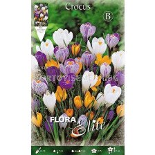 Минзухари (Crocus) Big Flowering Mix