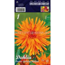 Далия (Dahlia) Cactus Ludwig Helfert