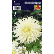 Далия (Dahlia) Cactus Tsuki-Yori
